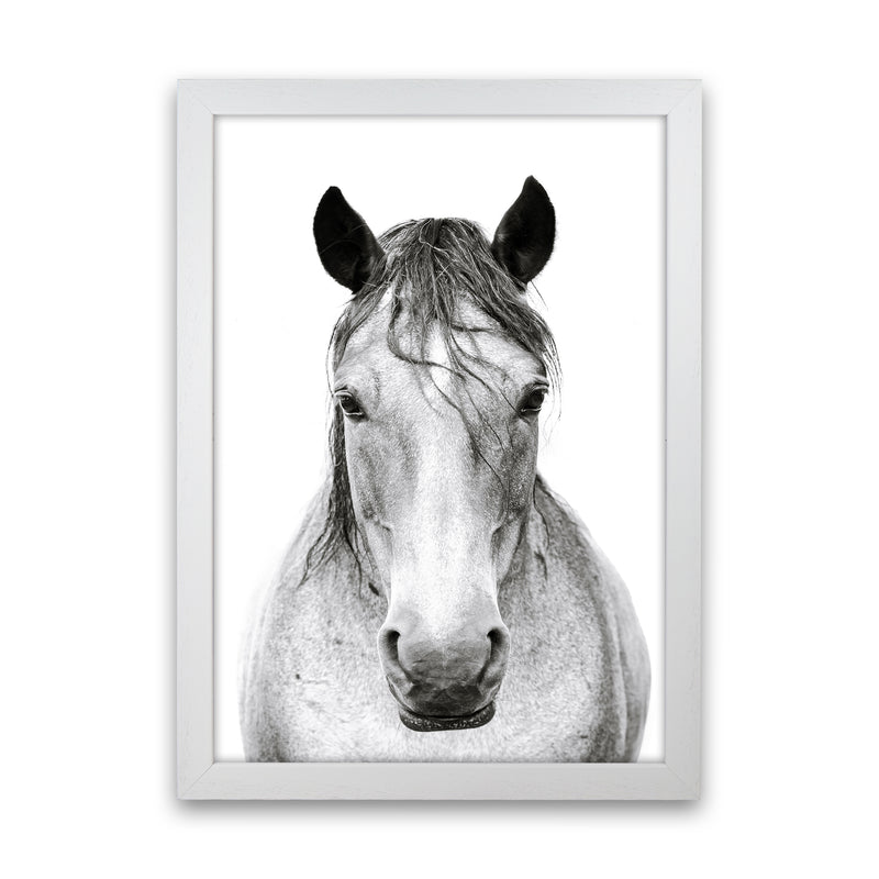Horse I Photography Print by Victoria Frost White Grain