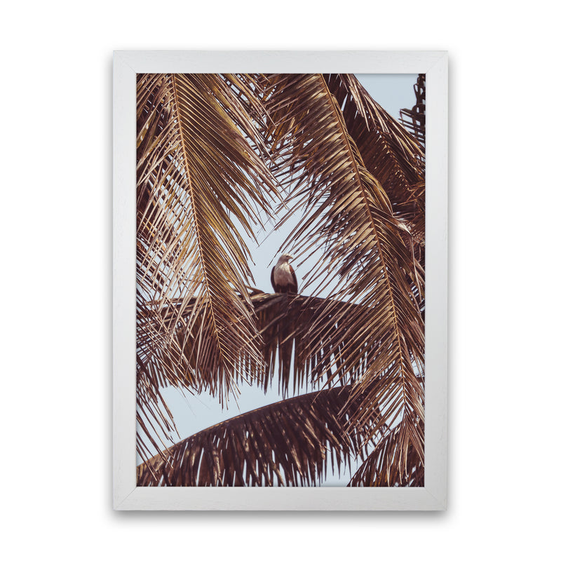 Eagle Photography Print by Victoria Frost White Grain