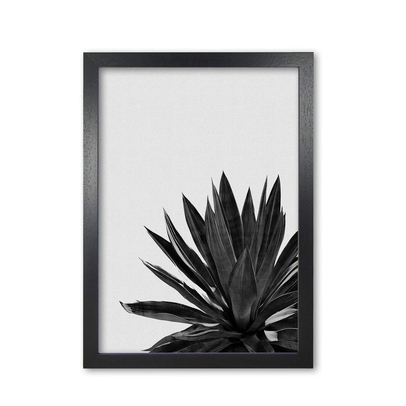 Agave cactus black and white fine art print by orara studio, framed botanical &