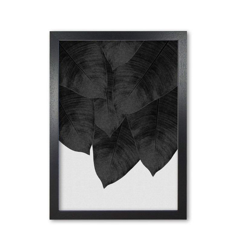 Banana leaf black &