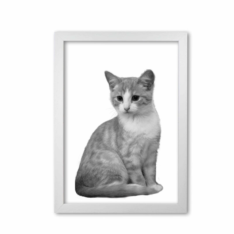 Black and white cat modern fine art print