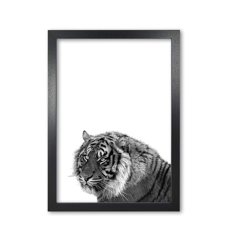 Black and white tiger modern fine art print