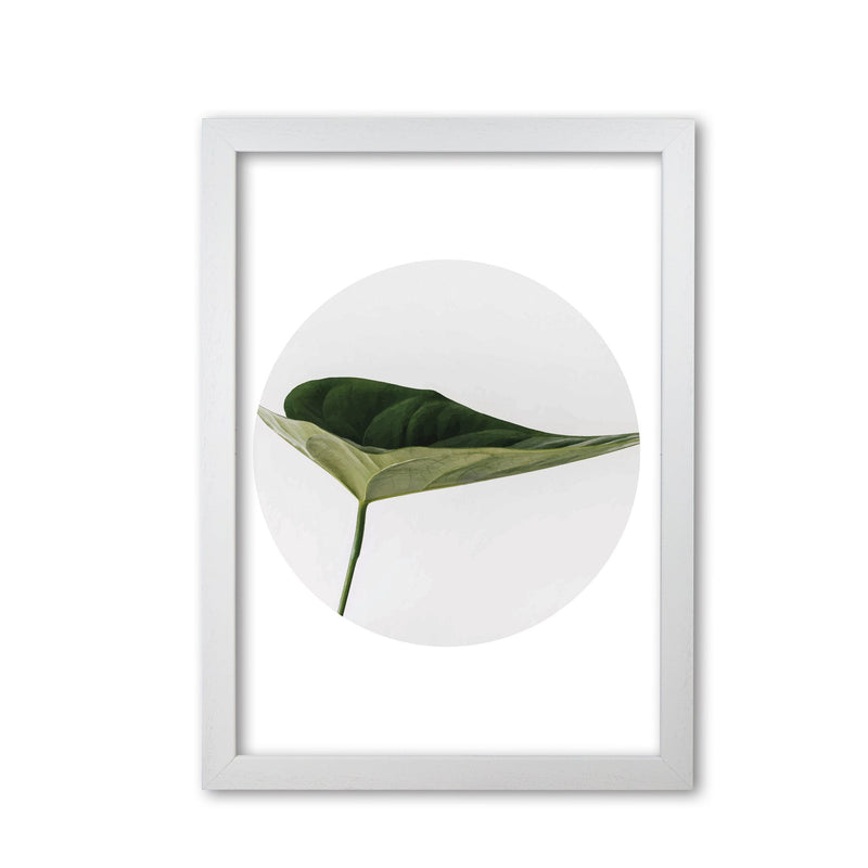 Doc leaf modern fine art print, framed botanical &