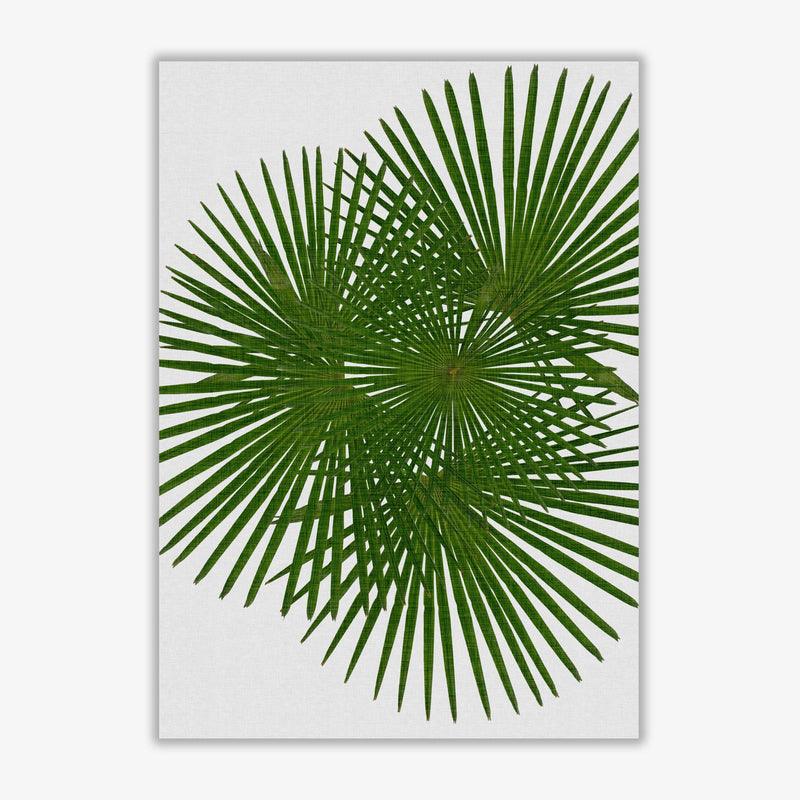 Fan palm fine art print by orara studio, framed botanical &