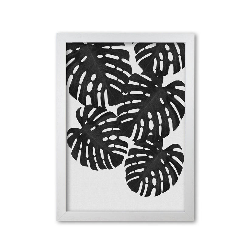 Monstera black &