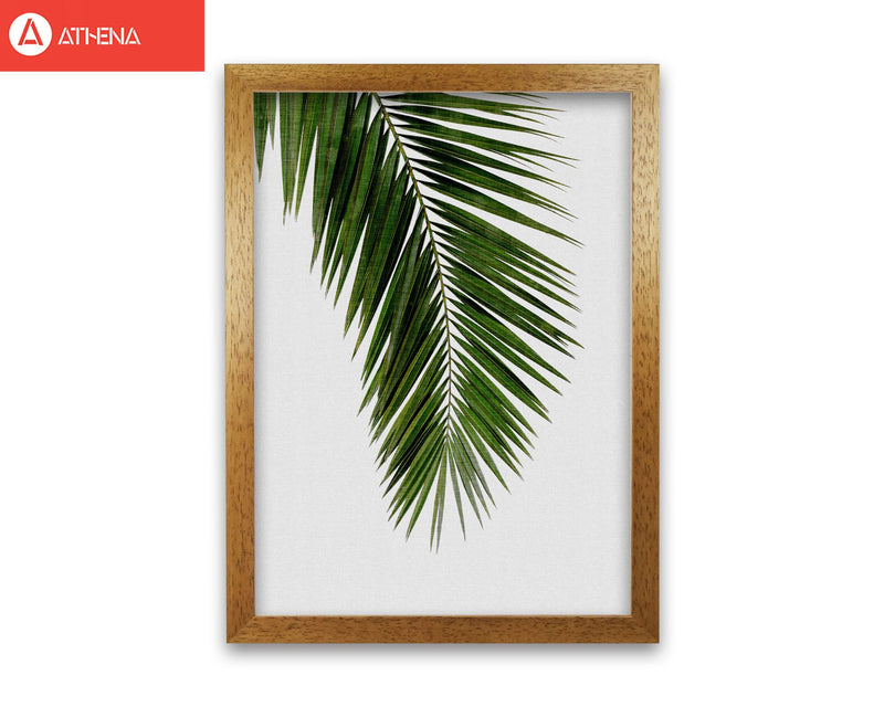 Palm leaf i fine art print by orara studio, framed botanical &