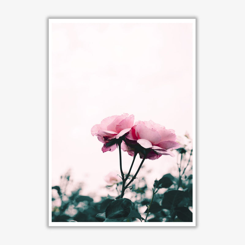 Pink rose modern fine art print, framed botanical &