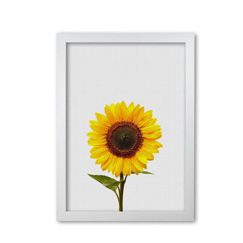 Sunflower still life fine art print by orara studio, framed botanical &