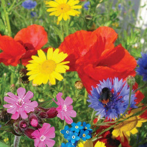 Load image into Gallery viewer, Beebom Urban Bloomer Seedbom - Save The Bees