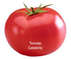 LAKEWAY Celebrity Tomato Plant  #1  for walk in purchase at our LAKEWAY Flash Garden