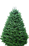 Early Order Christmas Tree - Fraser Fir - includes 10% Discount Delivery, Haul Off, Use of Stand