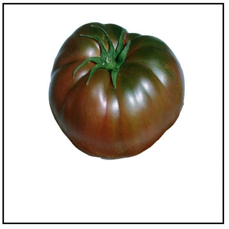 "DRIFTWOOD   Tomato Plant 4"" Black Krim for walk in purchase at our DRIFTWOOD Flash Garden"
