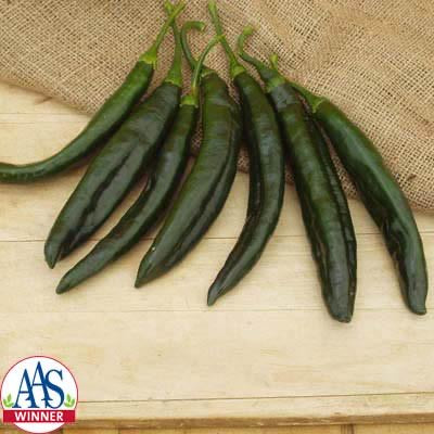 "Holy Mole Pepper 4"" Pasilla Pepper mild 700 SHUs"