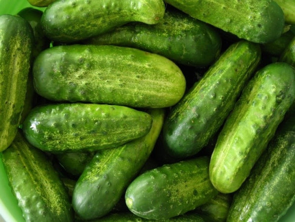 National Pickling Cucumber 4""