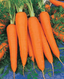 Carrot Qt Chantenay