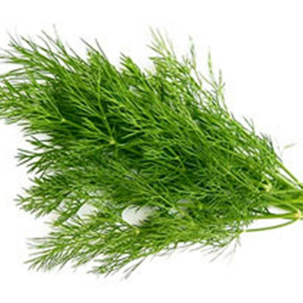 "'Bouquet' Dill 4""    Herb"