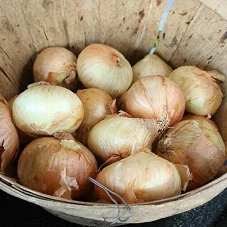 For Restaurants 25# box Noonday Sweet Onions