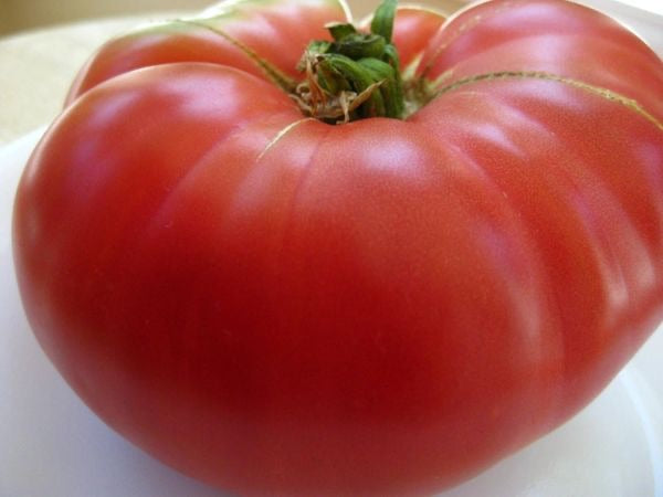 "Tomato 4"" Mortgage Lifter"
