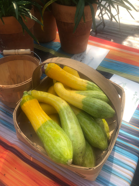 Big bunch of 'Zephyr' Summer Squash from our Test Gardens @ Rocky Creek Ranch Hye, TX