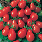 "Tomato 4"" Red Pear"