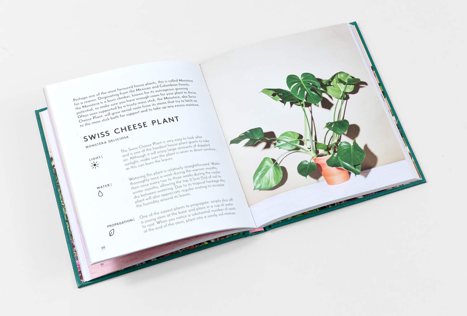 THE LITTLE BOOK OF HOUSE PLANTS BY EMMA SIBLEY