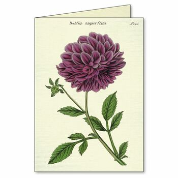Notecards Botany, Box of 8
