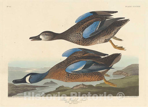 Art Print : Havell After Audubon, Blue-Winged Teal, 1836 - Vintage Wall Art