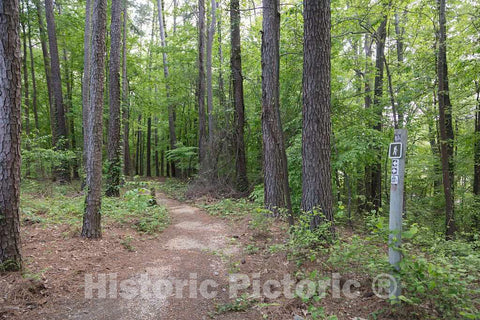 Photo - Footpath Along The Natchez Trace Parkway Near Tupelo, Mississippi- Fine Art Photo Reporduction