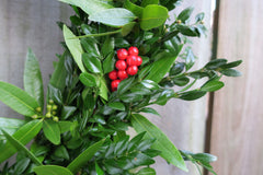 Boxwood and bay with red berries wreath