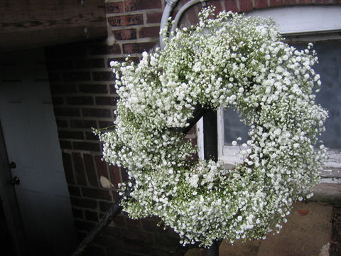 Fresh baby's breath wreath