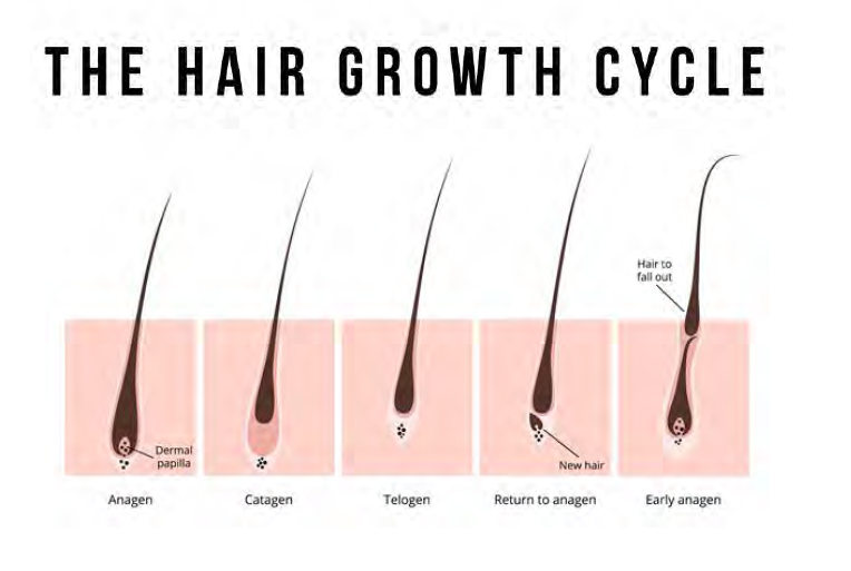 The Science Around NO Grow - Hair Growth Cycle