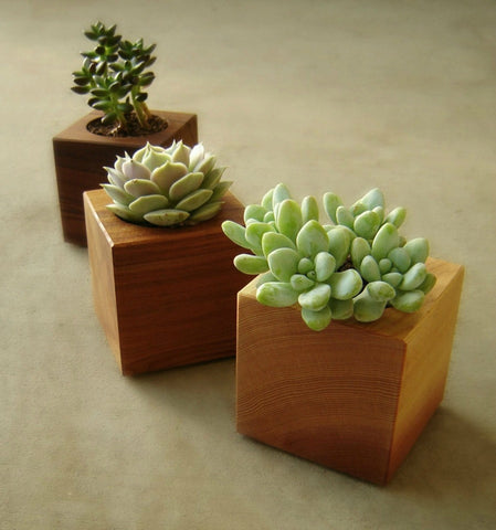 Wood Succulent Planters - Set of 3