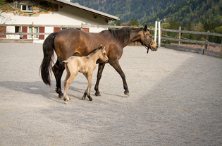 Can Horse Food Supplements Offer Hope For A Healthy Horse?