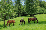 How Weed Control in Pastures Affects Horse Health