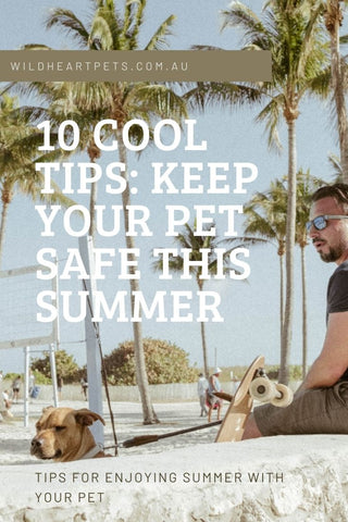 10 tips for a safe summer with your pet