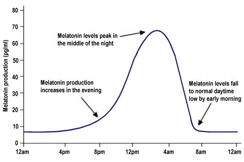 Melatonin Cycle
