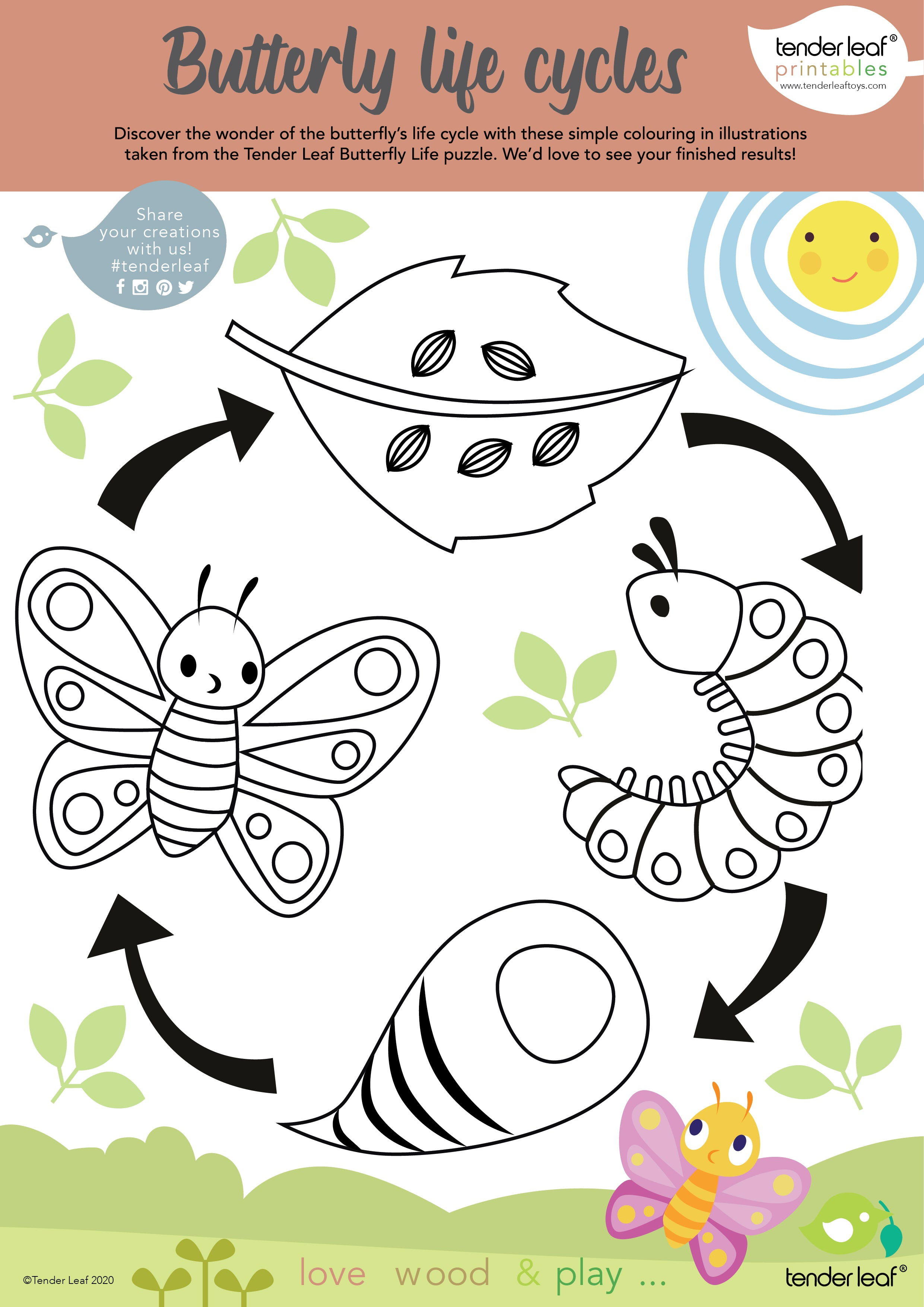 butterfly life cycle free download printable activity for children