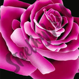 Big Beautiful Rose Digital Print - Steelhybrid