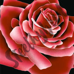 Load image into Gallery viewer, Big Beautiful rose digital print
