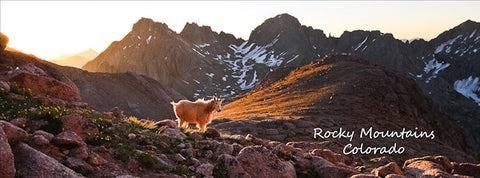 Rocky Mountains (Chicago Basin Goat) Postcard 4x11""