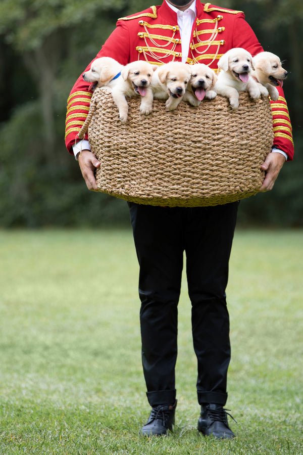 BASKET OF ENGLISH LABRADOR PUPPIES