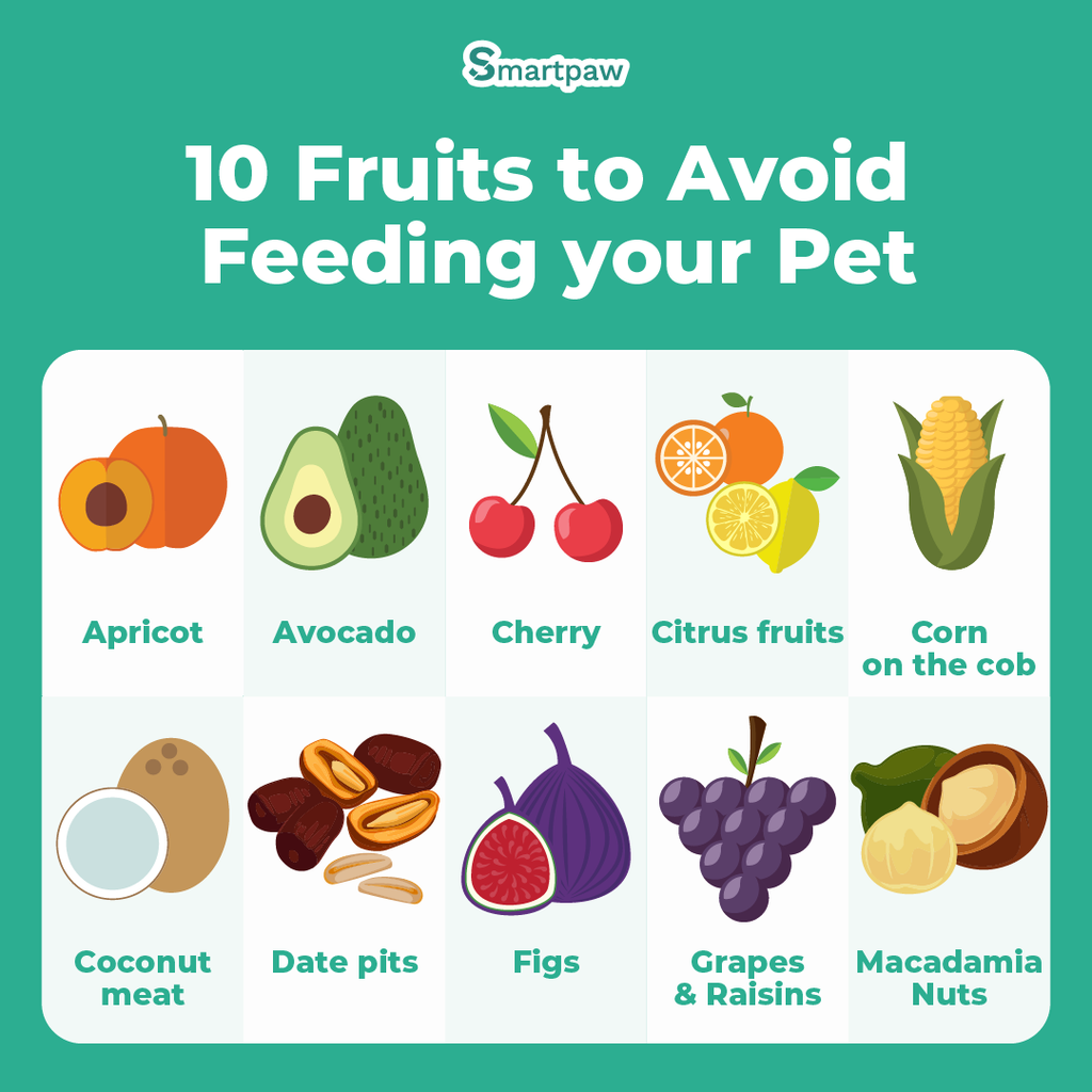 Infographic image of fruits to avoid for pets (cats and dogs)