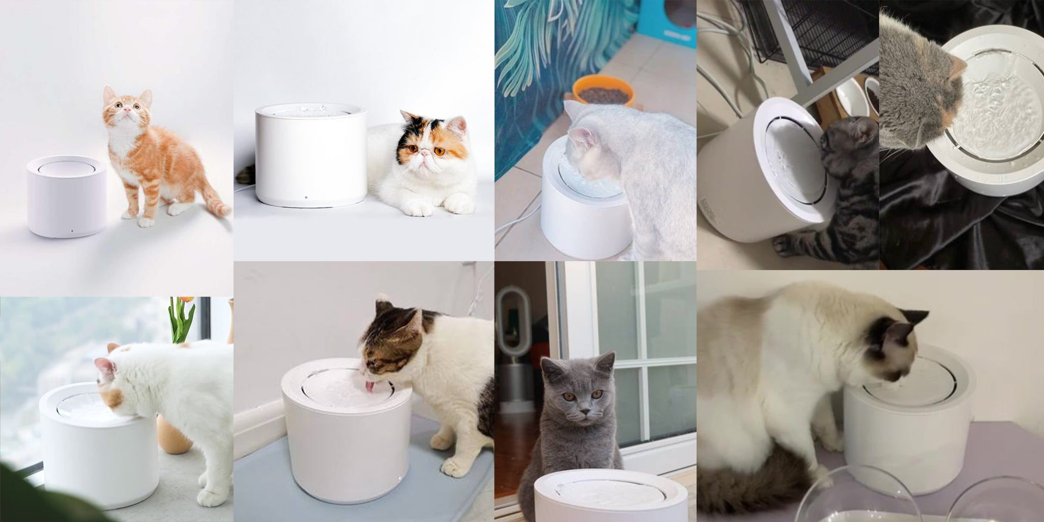 Petree Automatic Pet Water Fountain Dispenser