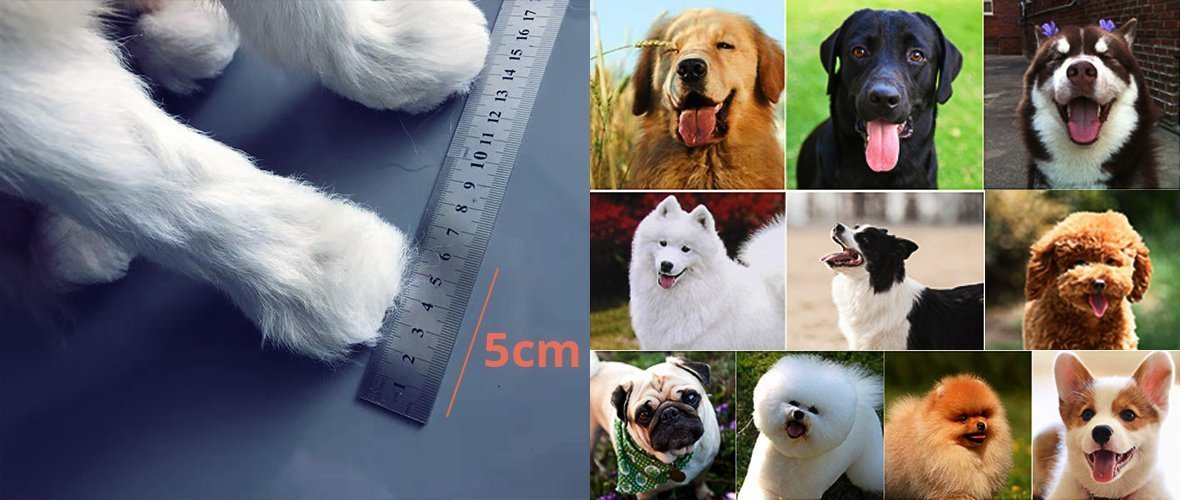 Measuring the paw with a ruler and dog breeds