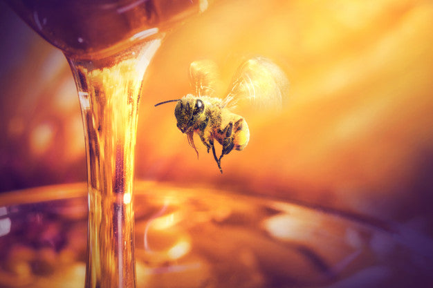 Bee flying to honey dripping in glass jar Premium Photo