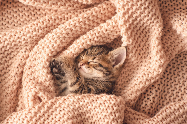 Cute little red kitten sleeps on fur white blanket Premium Photo