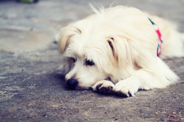 Dog lonely alone Free Photo