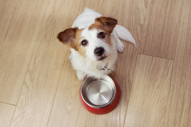 Hungry dog food with a red empty bowl. high angle view. Premium Photo
