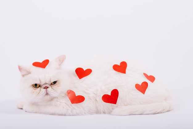 Lovely pets composition with white cat Free Photo