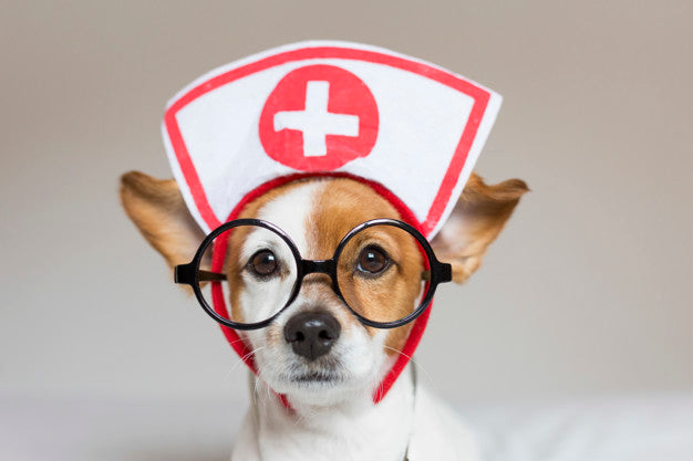 Portrait of a cute young small dog sitting on bed. wearing stethoscope and glasses. he looks like a doctor or a vet. Premium Photo